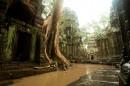 雨中的丛林