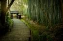 东京的竹林