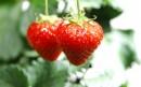 挂起来的两颗草莓