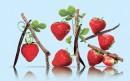 有艺术感的草莓