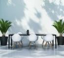 桌椅与摆放的绿色植物