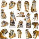 多老虎集合图