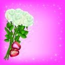 白玫瑰浪漫背景