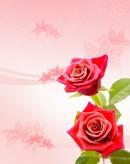 玫瑰花装饰背景 图