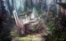 森林中的遗迹