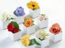 小盒子里各种花