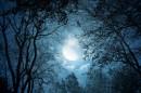 仰拍树空隙的半月