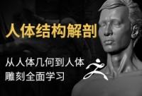《男性人体结构解剖》 —— 骨骼,肌肉,人体从讲解到雕刻全系列教程【实时答疑】
