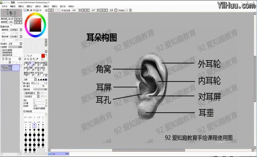 课时9:耳朵的绘制
