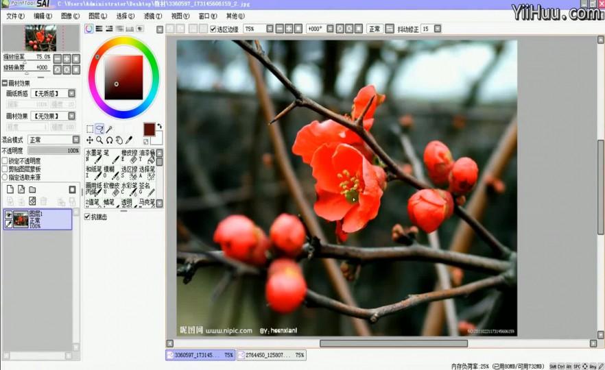 课时7:植物梅花