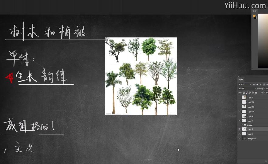课时42:树木和植物