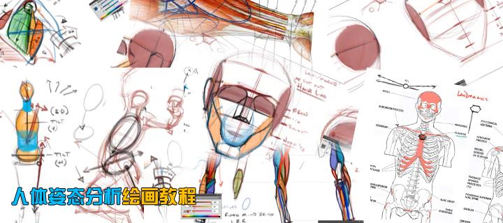 人体姿态分析绘画教程