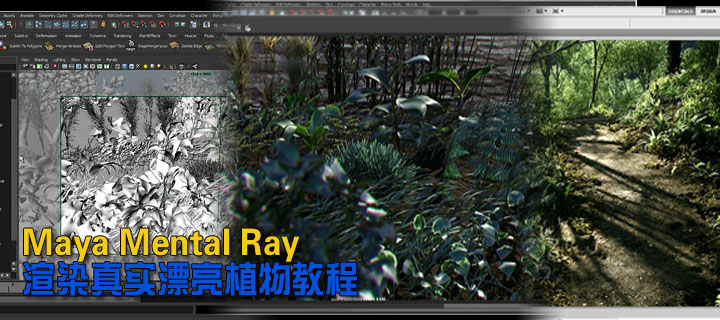 Gnomon Maya Mental Ray渲染真实漂亮植物教程