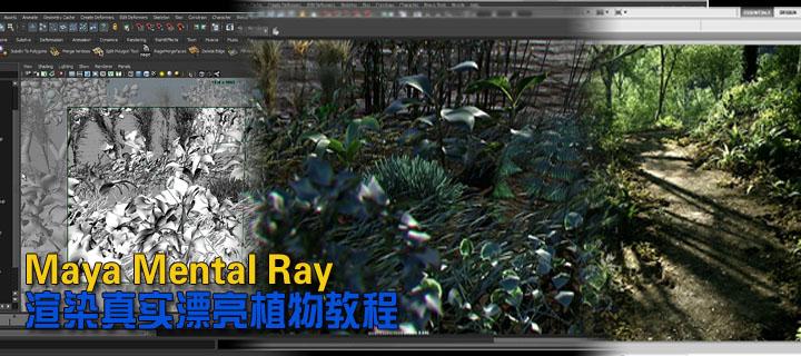 Gnomon Maya Mental Ray渲染真实漂亮植物教程