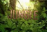 AK系列 第127期 热带丛林