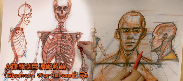 人体解剖学讲解教程(Gnomon Workshop出品)