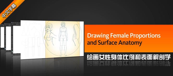 绘画女性身体比例和表面解剖学(Digital Tutors出品)