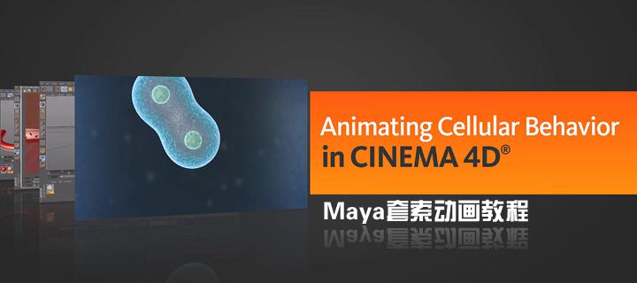 CINEMA 4D细胞行为动画(Digital Tutors出品)