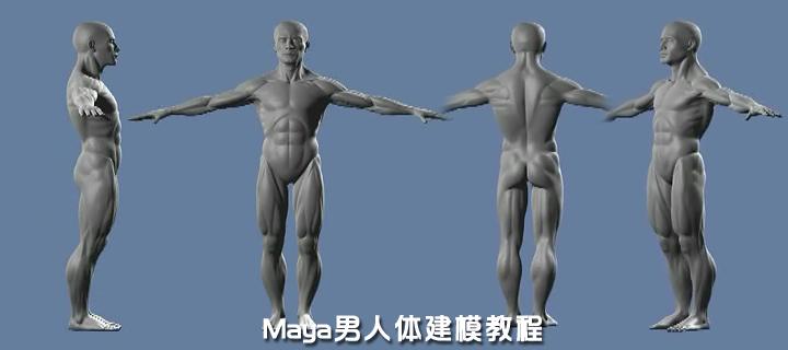 Maya男性人体建模教程