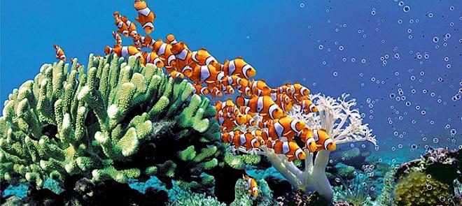 Maya海底鱼群动画特效全攻略