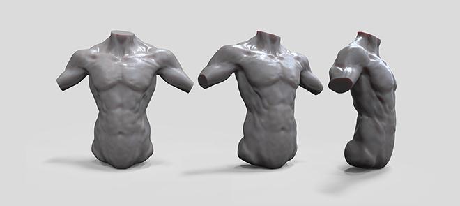 PS绘画骨骼和人体肌肉
