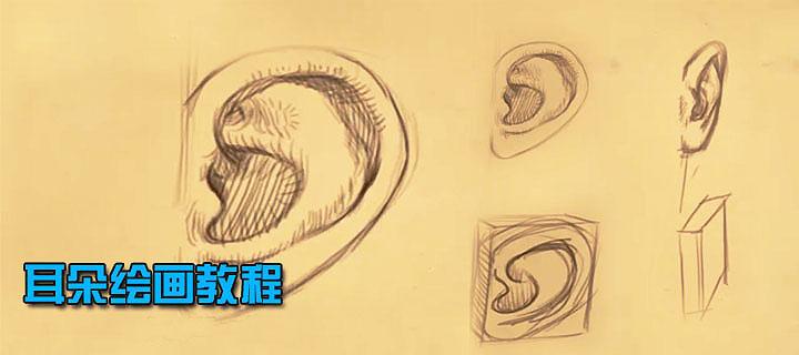手绘 耳朵绘画教程