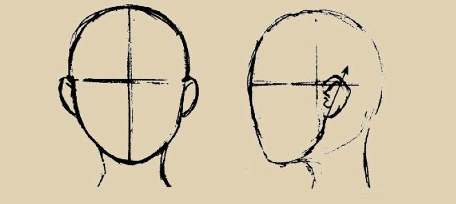 头部结构系列