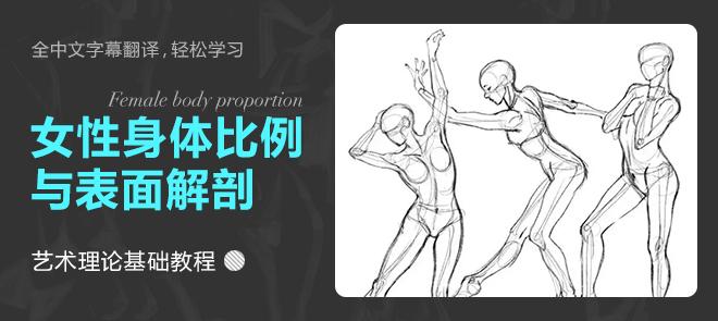 绘画女性身体比例和表面解剖学