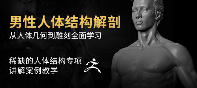 《男性人體結構解剖》 —— 骨骼,肌肉,人體從講解到雕刻全系列教程【實時答疑】